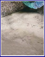 Carpet Mold Cleaners in New York City-Image
