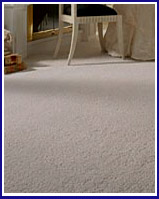 NYC Carpet Mold Cleaners-image